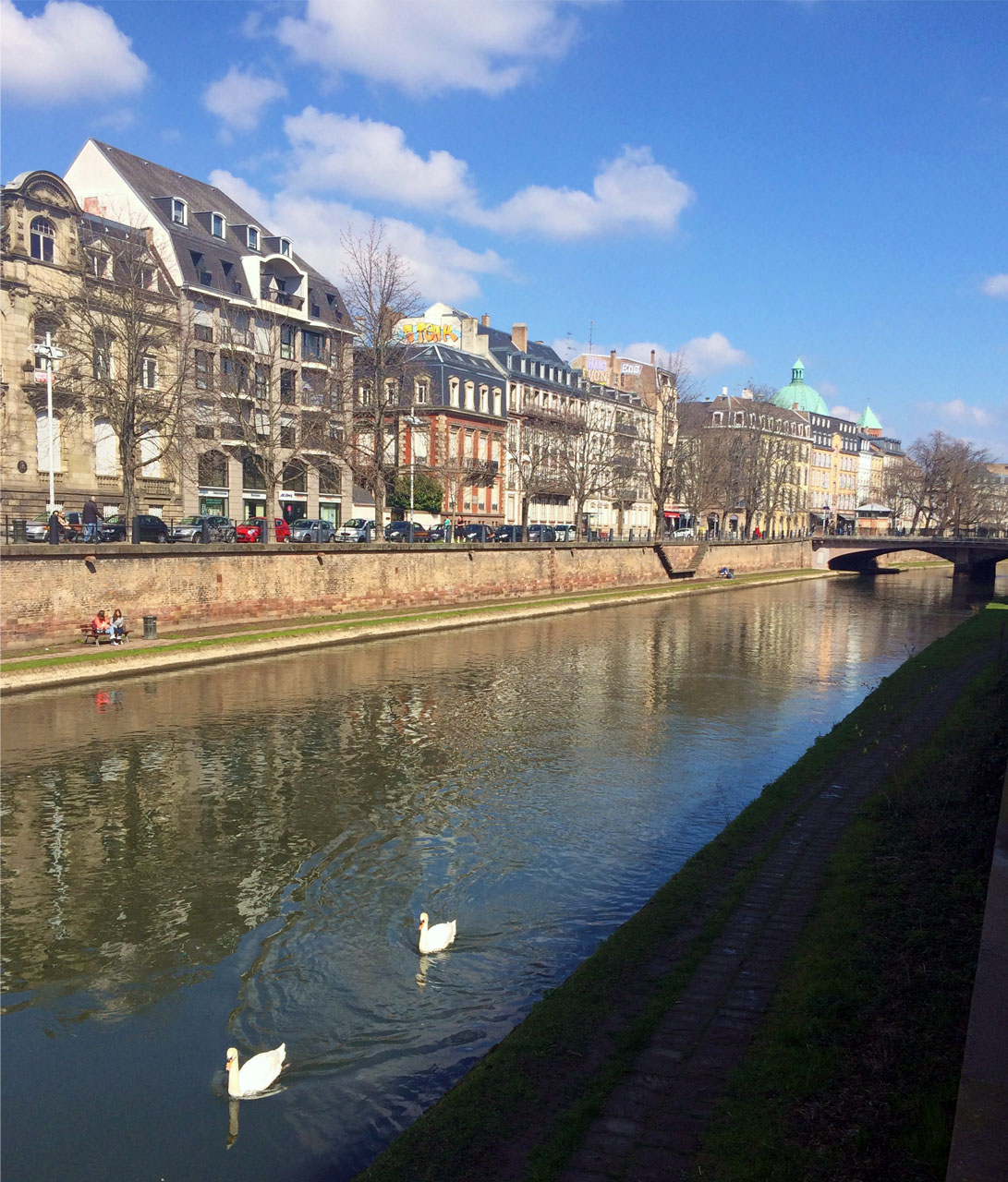 It's a joy to see the swan glide through the canal against the beautiful backdrop of Strasbourg