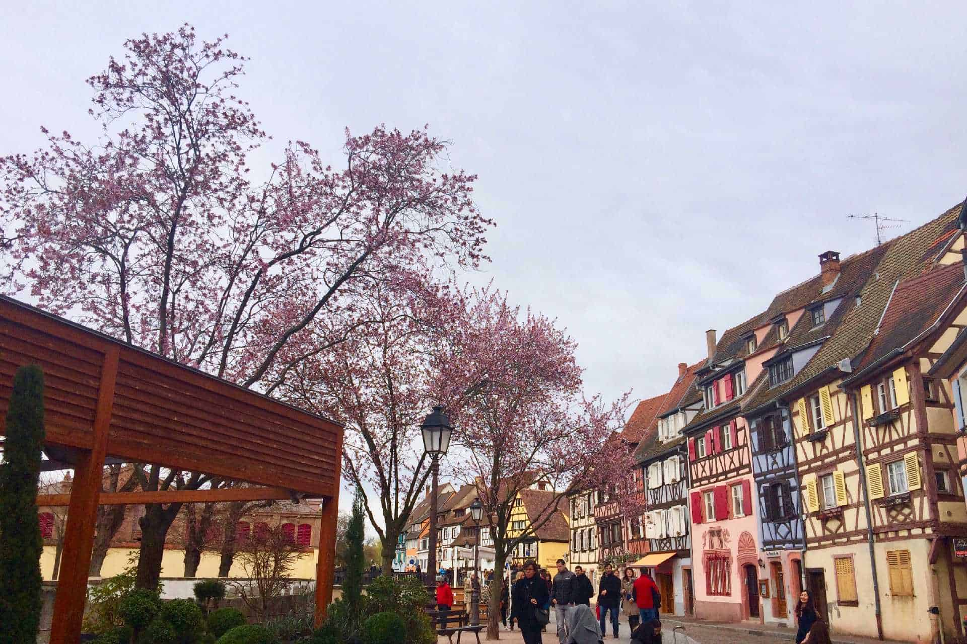 Cherry blossoms near Easter day in Petite Venise Colmar