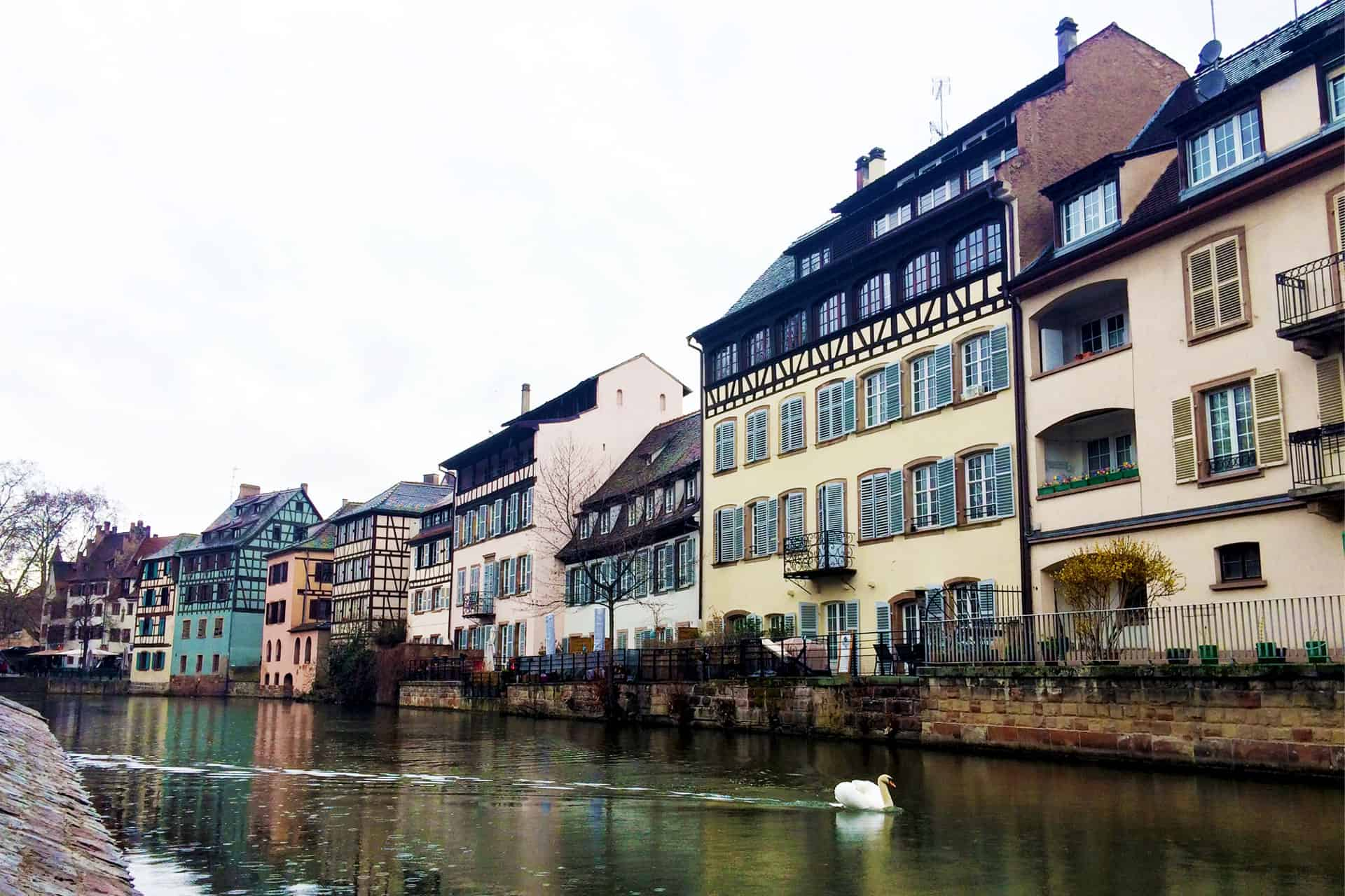 Caught a swan gliding through the Strasbourg River.